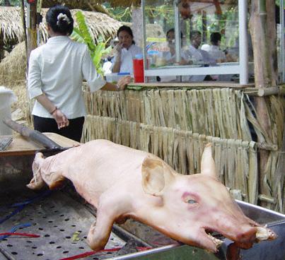 fair-pig