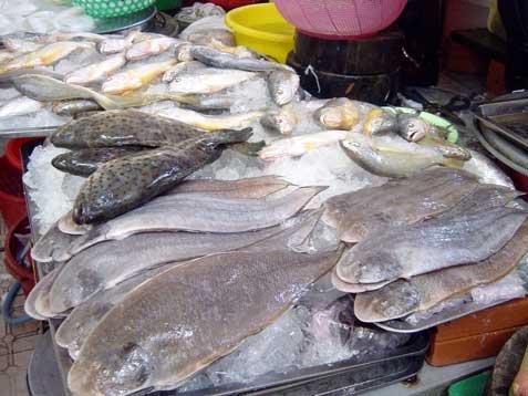 Btflatfish