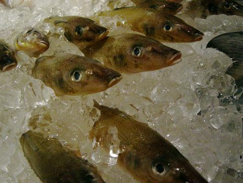Fishtalefish