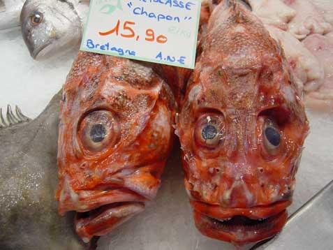 Tlsmarche2fish